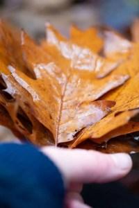 Efterårsblade til krans