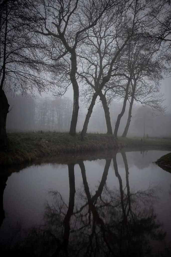 Vintertræer spejler sig i tågen