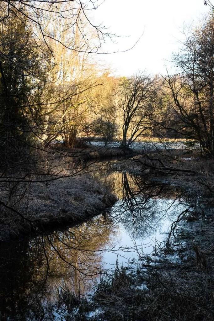 Vintertræer ved Tvis Mølle