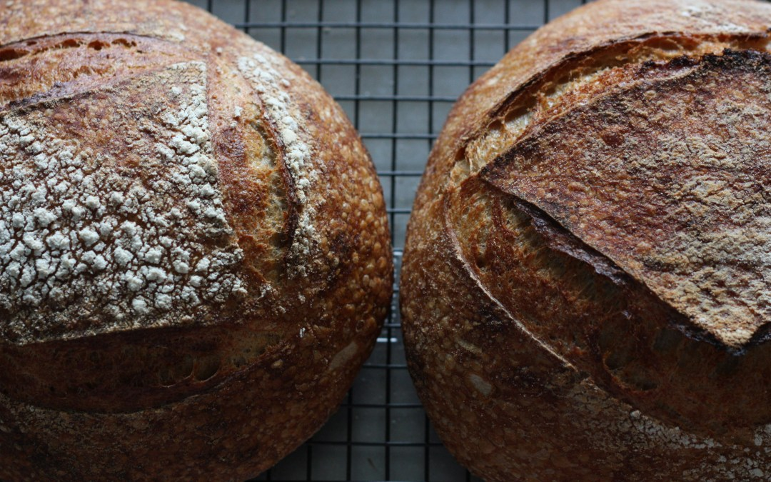 The Basics: Yeast