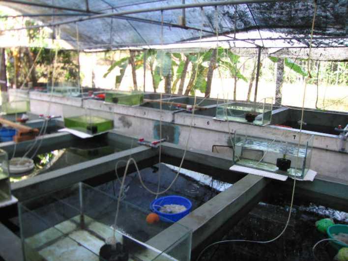 Haryana to set up an ornamental fish hatchery