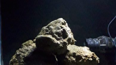 Photo of Live Rock or Dead Rock For Your Aquarium