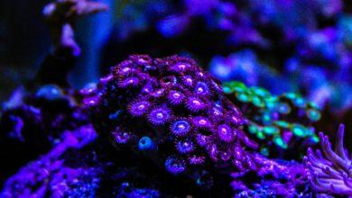 Polyps Toxic Coral