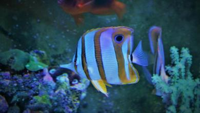 Marine Aquarium Setup Cost in India