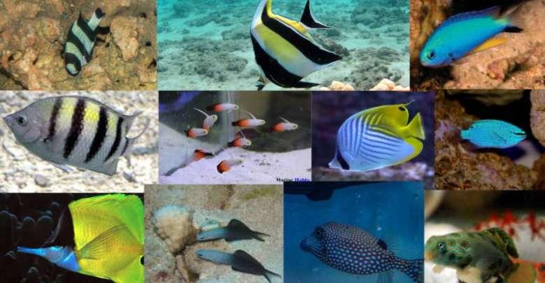 Marine Fish Beginners Should Avoid