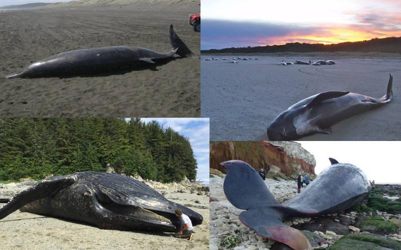 Whale Stranding Infographics