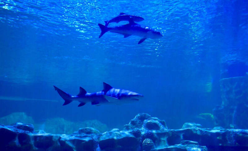vgp marine kingdom exhibits