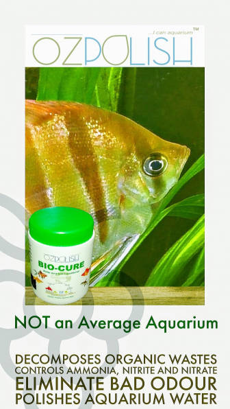 OZpolish-Bio-Cure