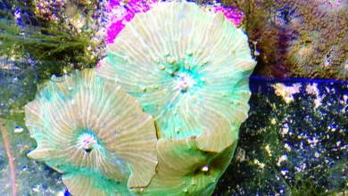 Photo of Keeping Mushroom Corals
