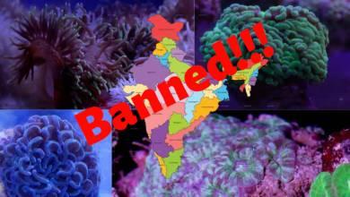 Photo of India's stand on Aquarium Corals