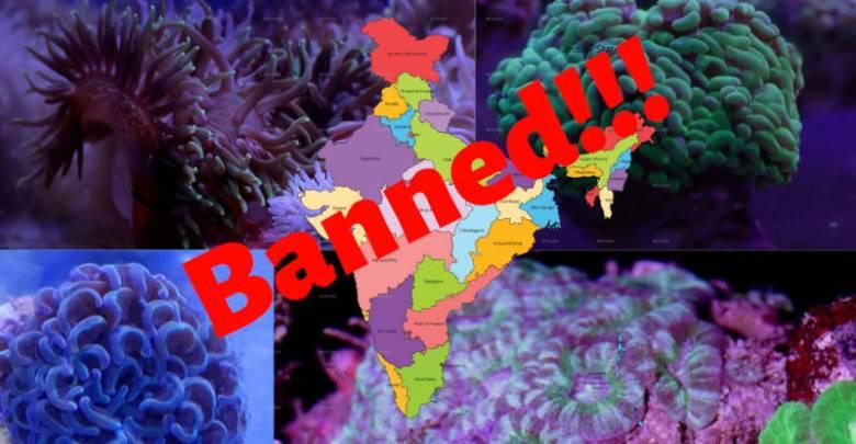 India's stand on Aquarium Corals