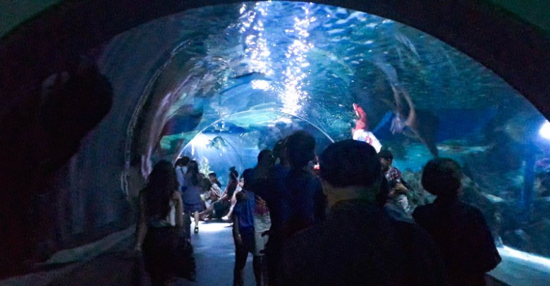 Highest Aquarium