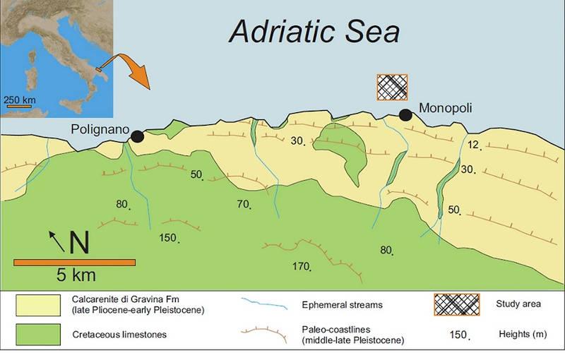 Italy has a coral reef along the Italian Adriatic coast-2