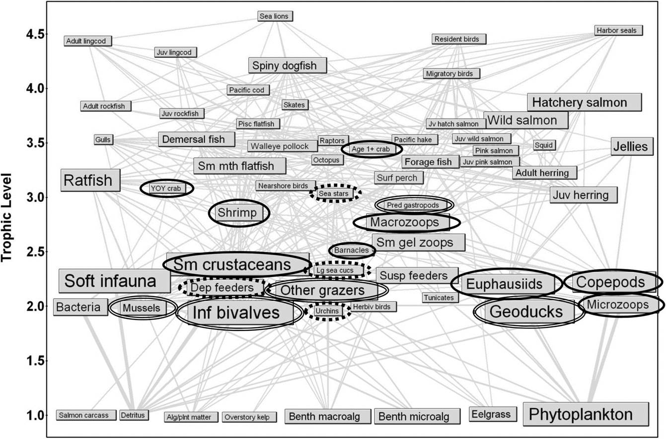 pacific ocean food web diagram toyota camry interior parts end to spatiotemporal ecosystem modeling for puget