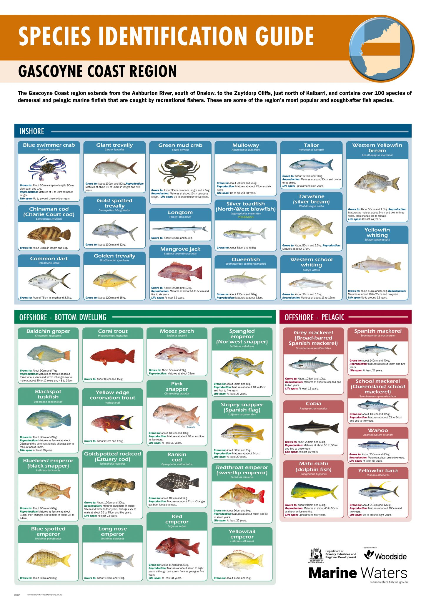 Poster Species Identification