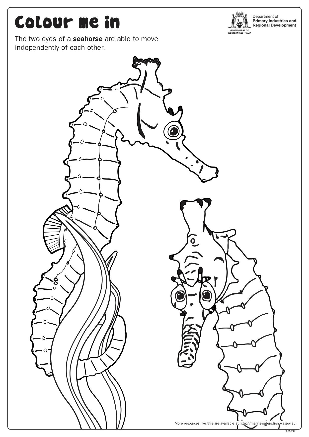 Fishy Fun Sheet Seahorse Pair