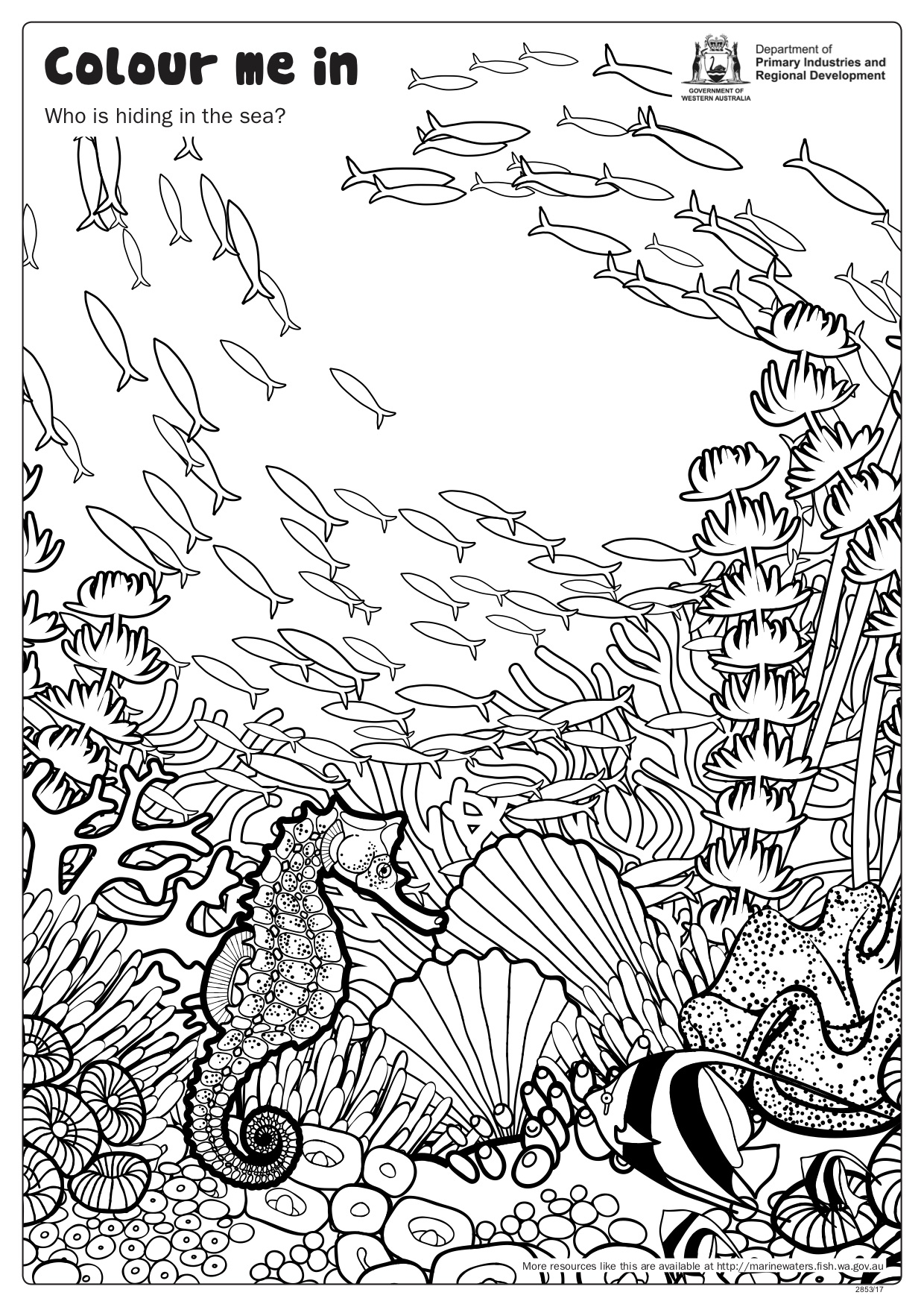 Shoal Of Fish And Seahorse