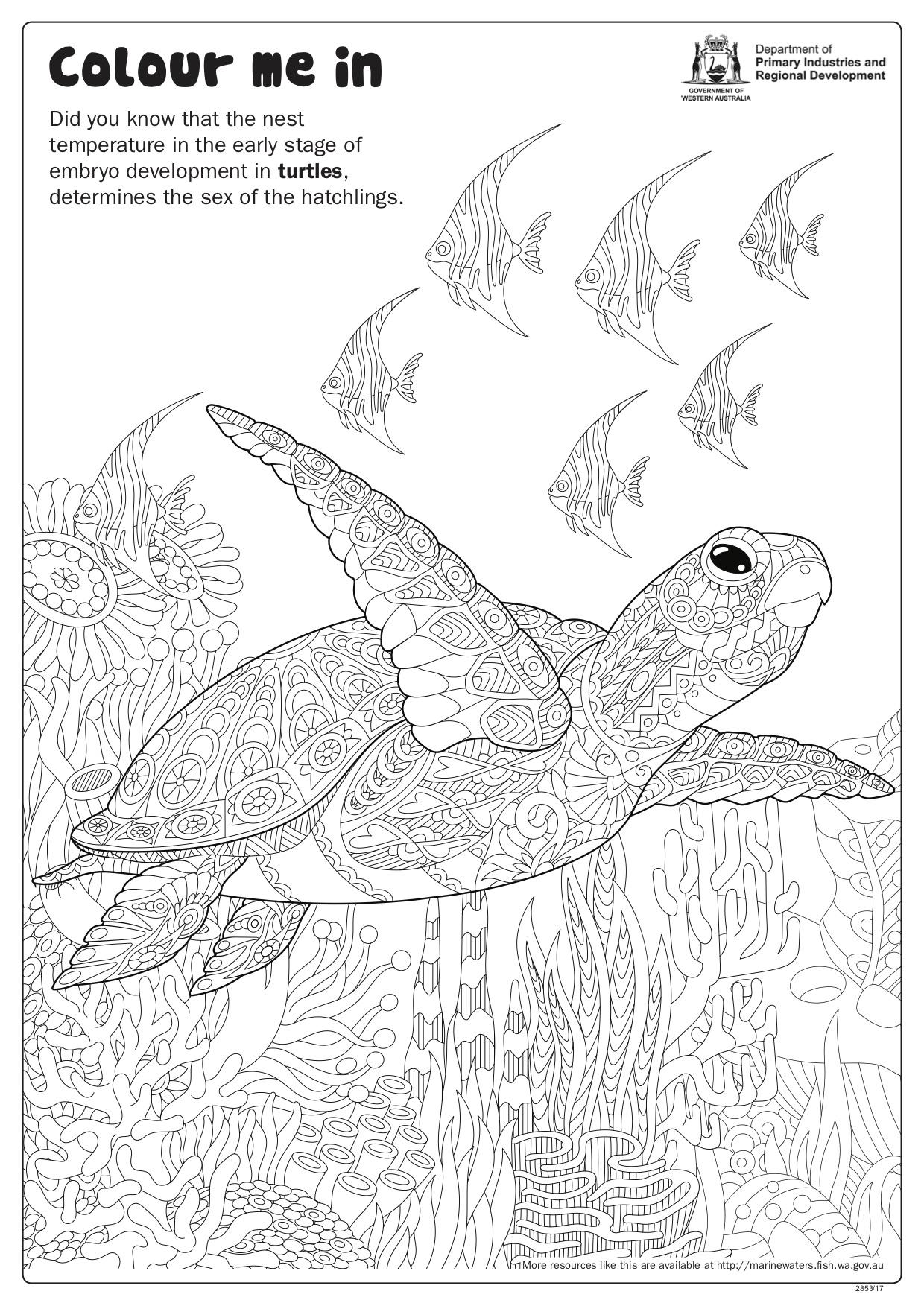 Fishy Fun Sheet Turtle And Fish