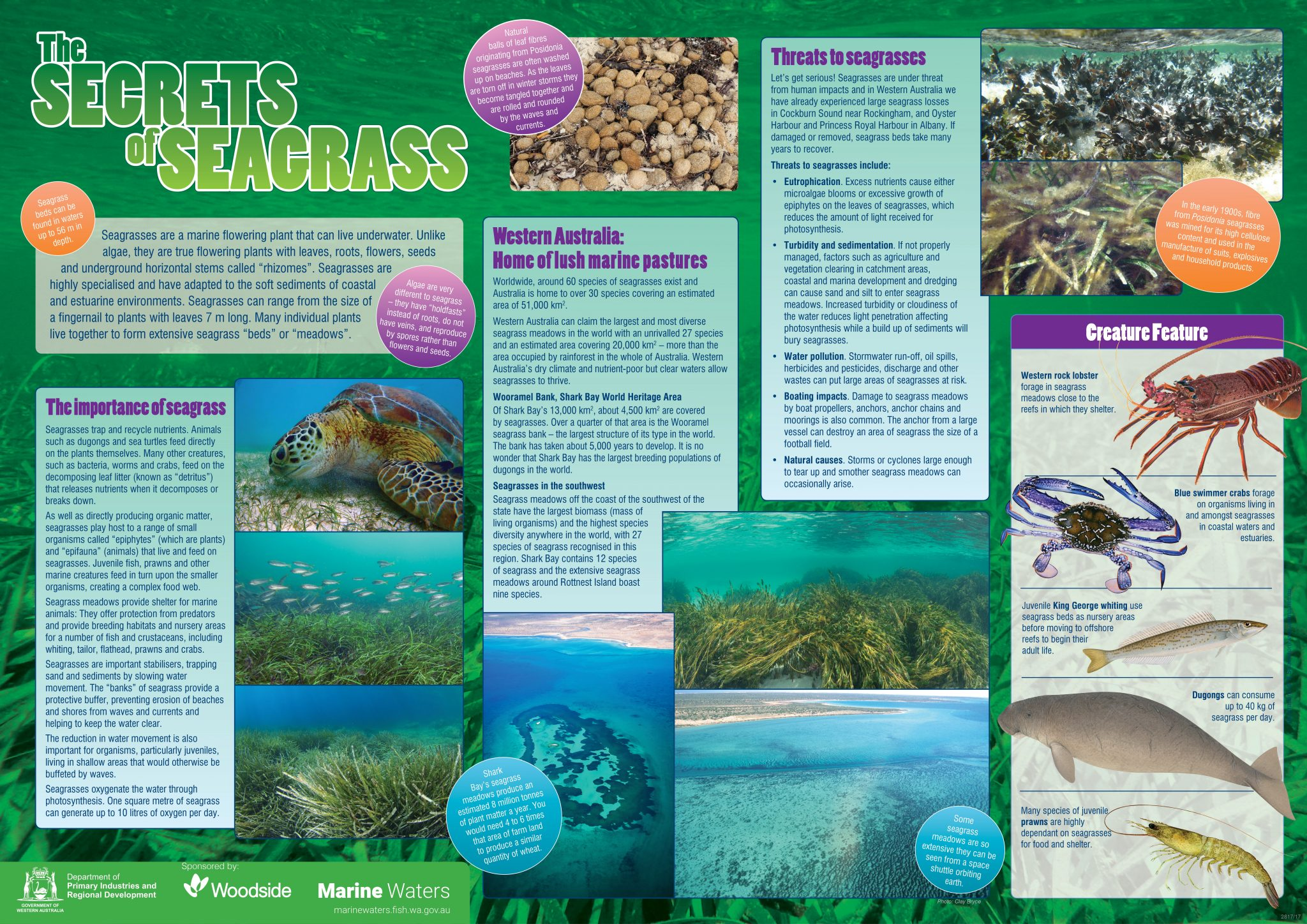 Poster The Secrets Of Seagrass Department Of Primary