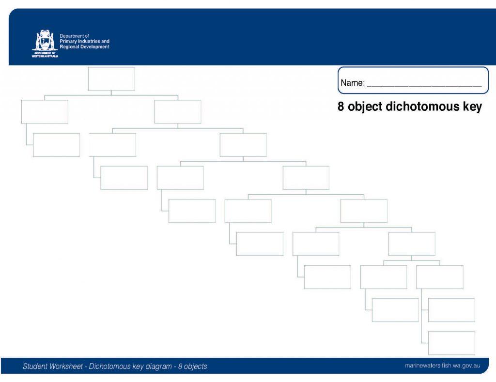 Student Worksheet Dichotomous Key Diagram