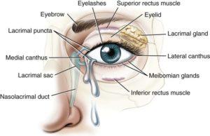 eye anatomy marin eyes