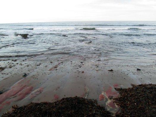 Red sandstone adding colour to the shore.