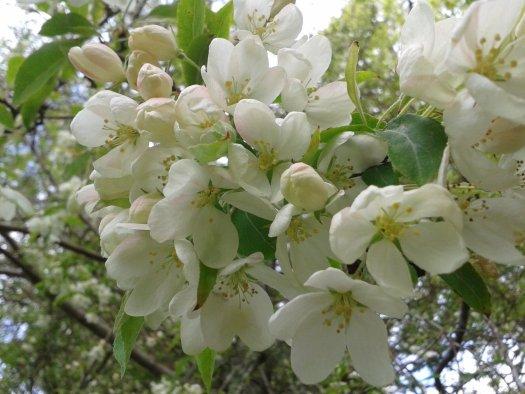 Colours of Skye Spring: Blossom