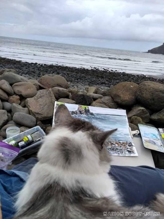 Cat at Talisker Bay Isle of Skye