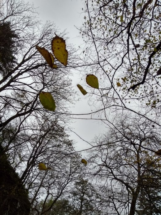 Reference photo tree leaves