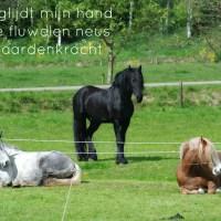Japans Gedicht: Paardenpower