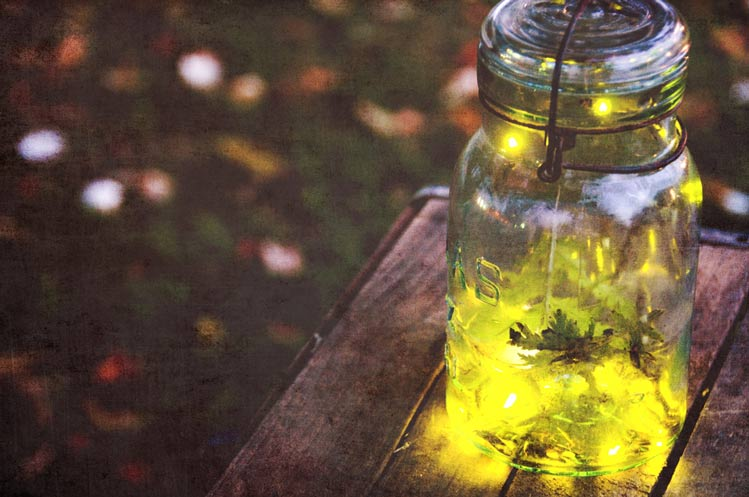 Dragonflies and Moonbeams