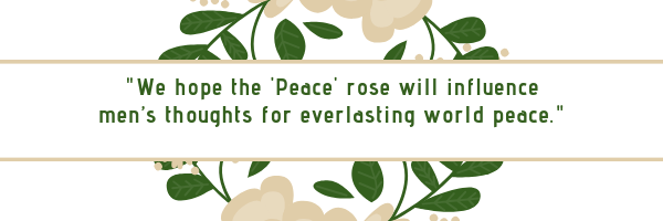 Peace rose, Kodiak, Alaska