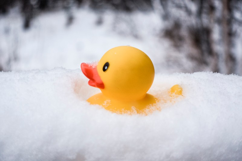 Snow, snowflake, snow crystal, real snowflake, snowflake photography, rubber, duck