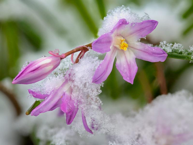 winter flowering plants, organic gardening, Kodiak Island