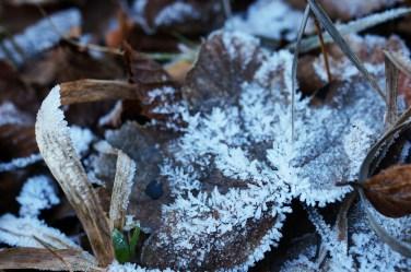 gefrorene-blatter
