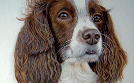 Nancy the spaniel - Watercolour pet portrait