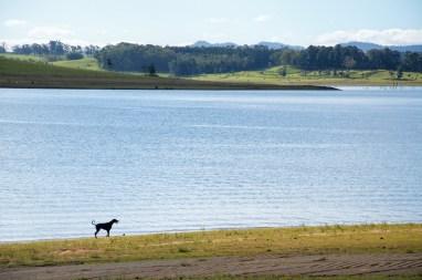 Dog at Tinaroo Reserve