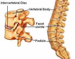 cartilage dan disk