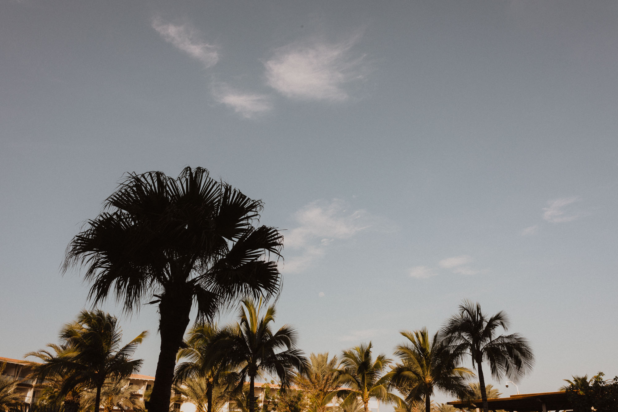 palm trees in Mexico during honeymoon
