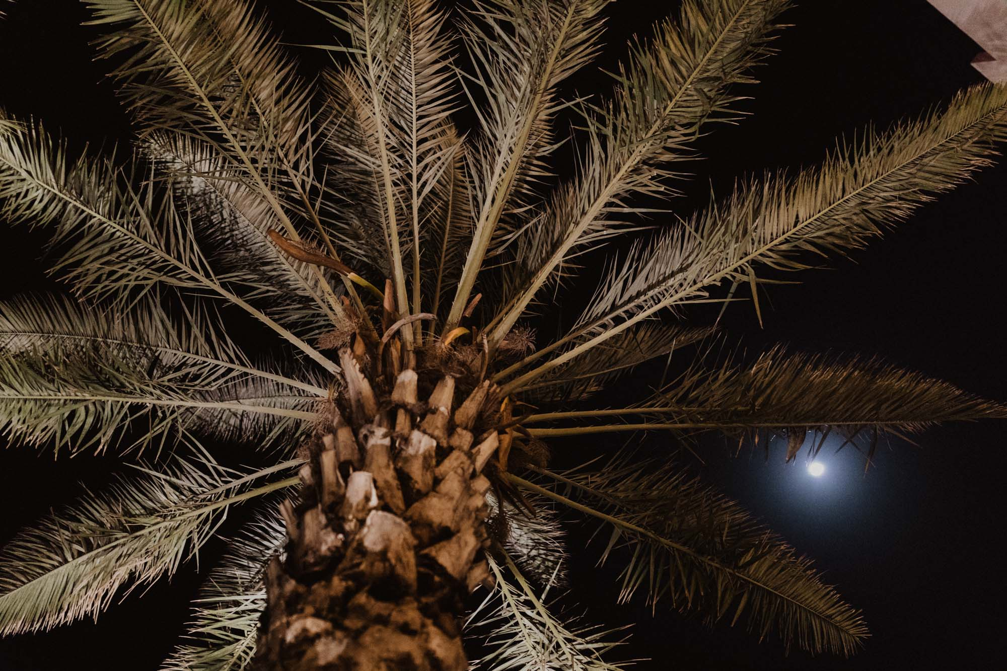 palm tree and the moon