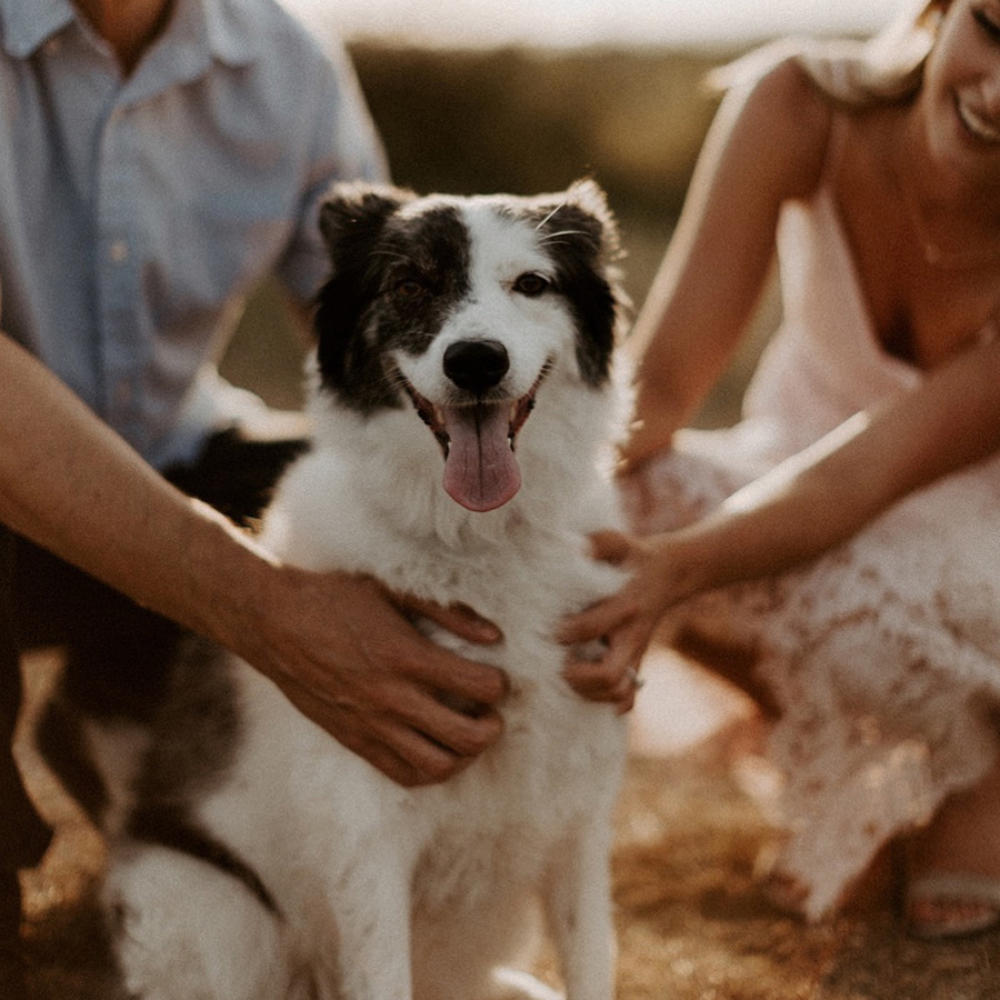 Fort Worth engagement and wedding photographer picture of dog