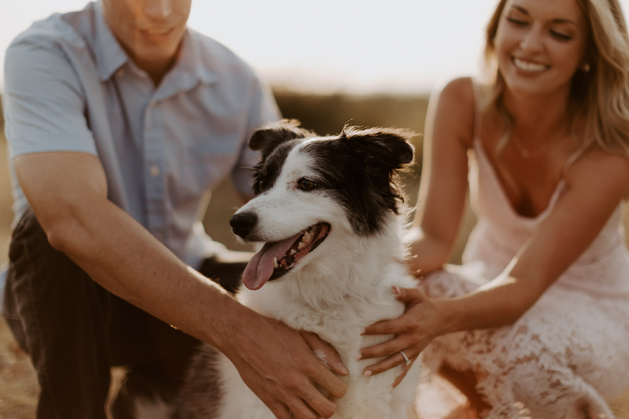 dog looking around during engagement session