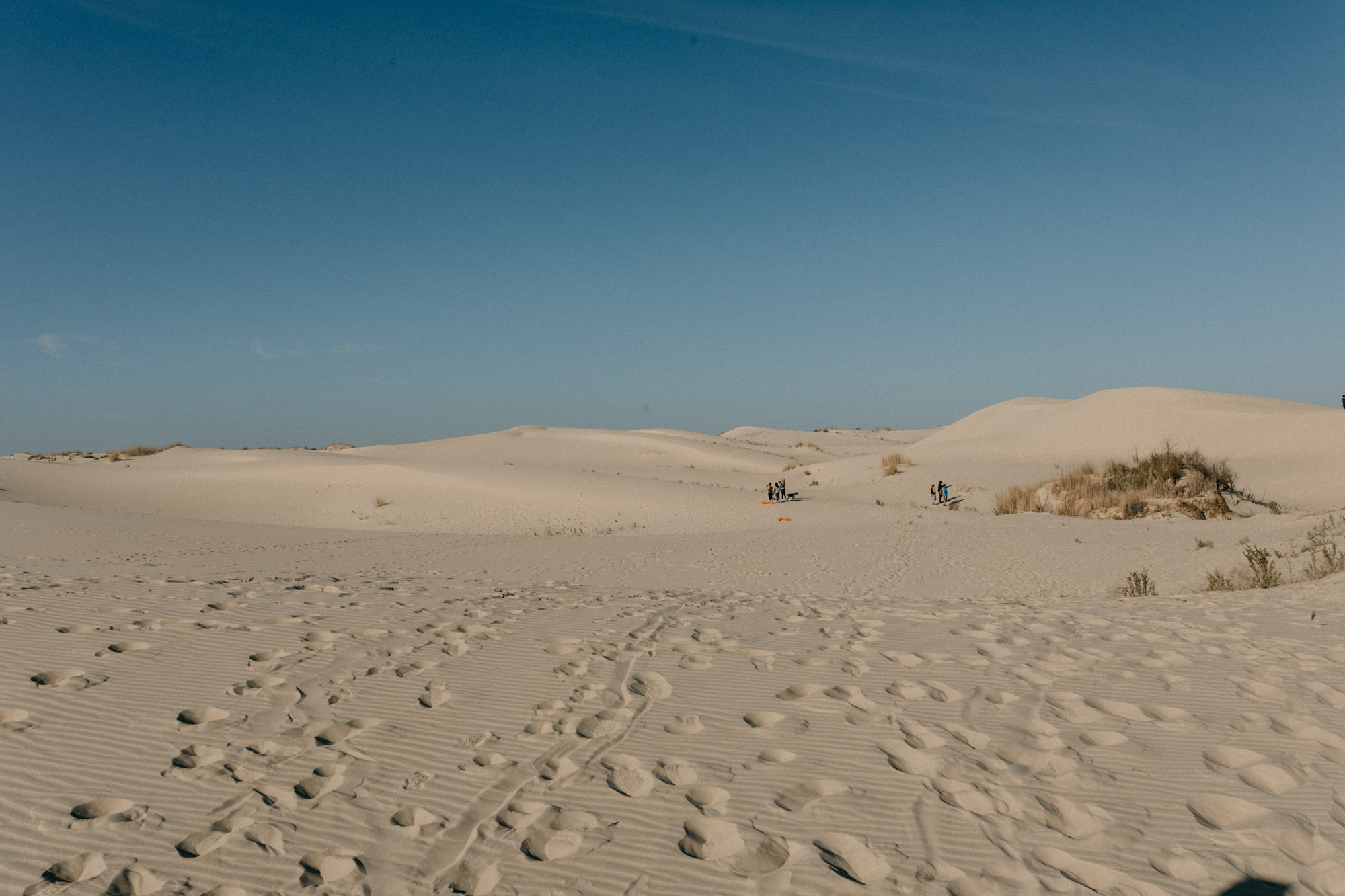 Monahans Sandhill State Park Photography