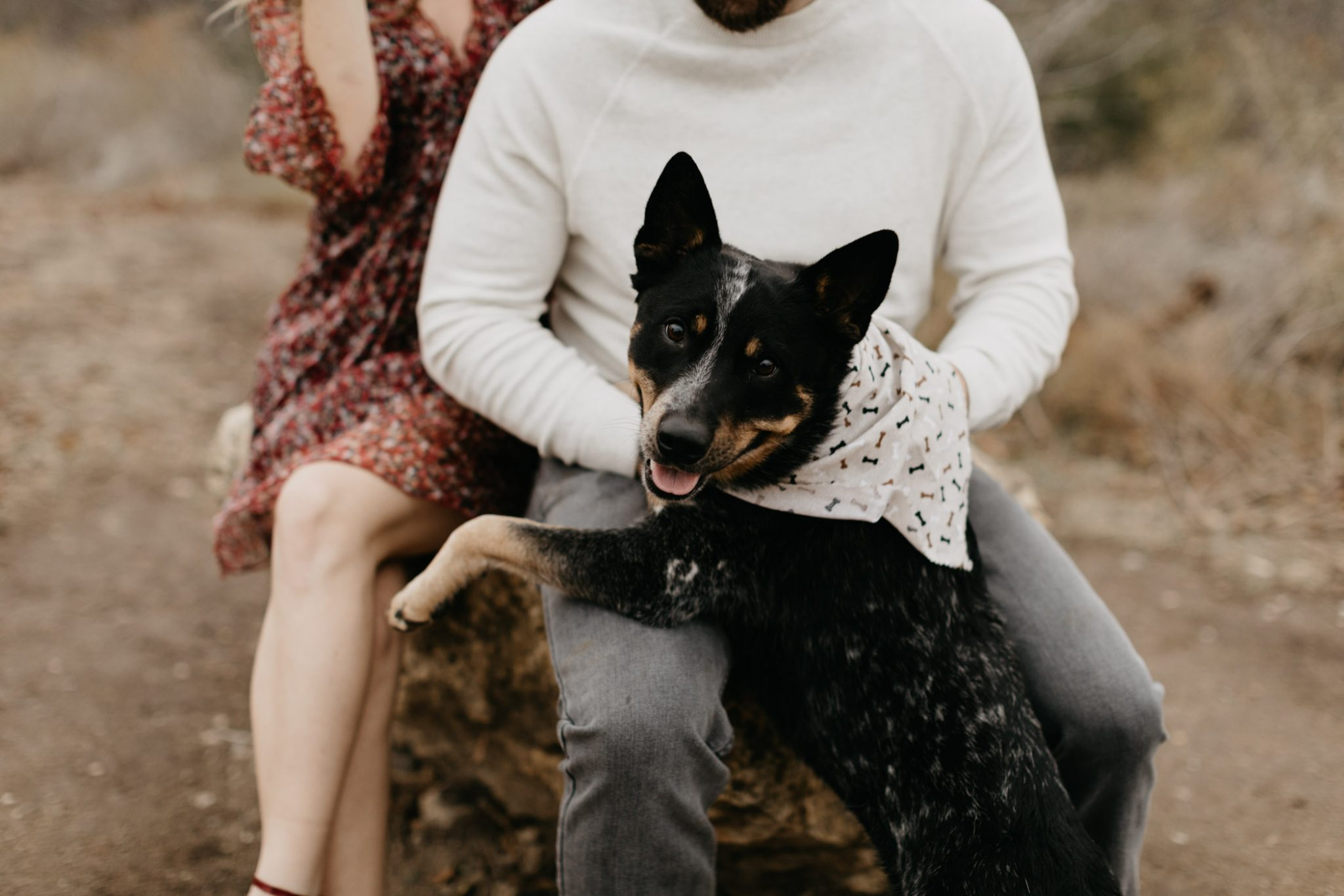 Dog at engagement session being cute