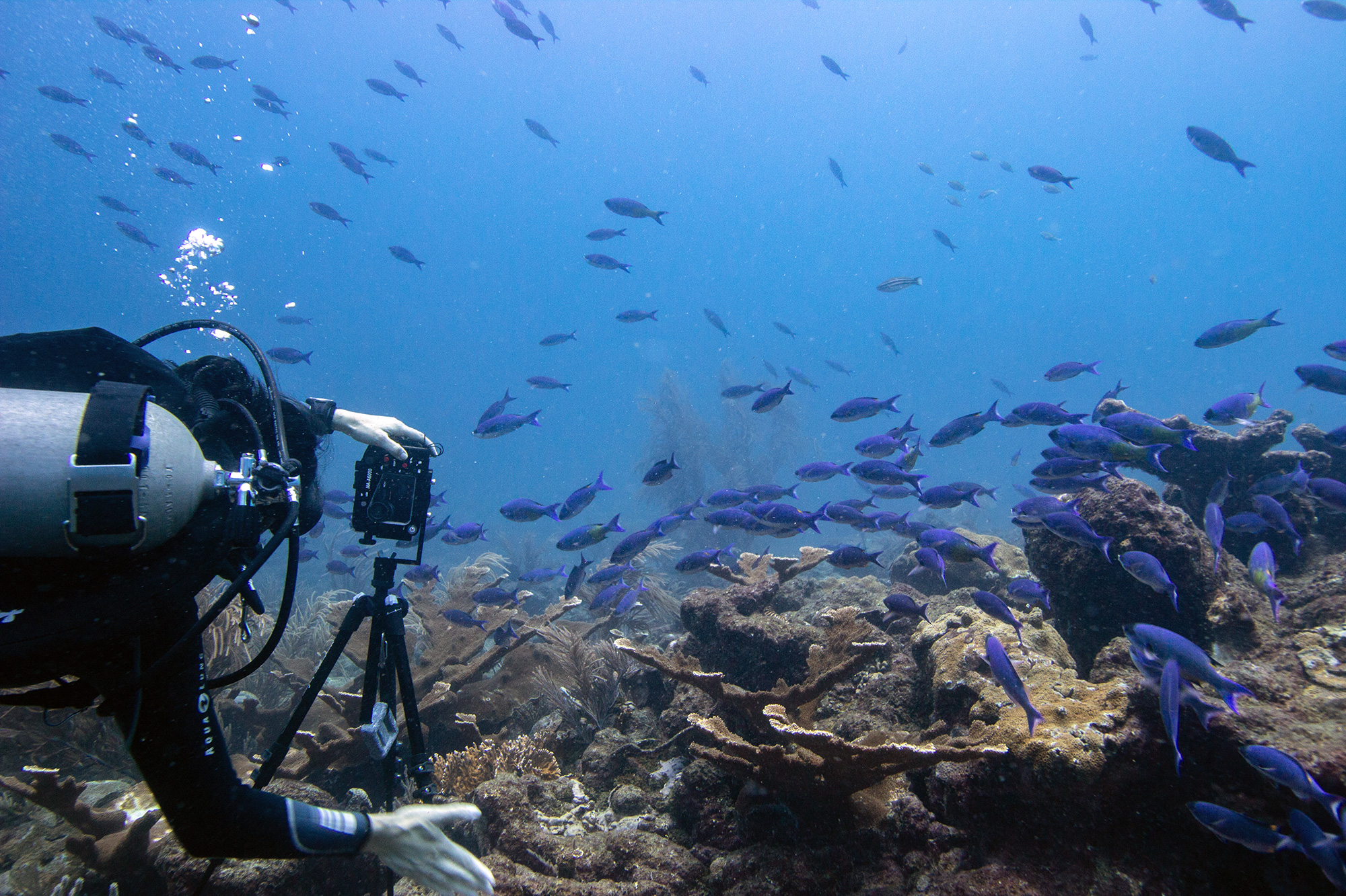 Culloden Reef featuring Creole-Wrasse