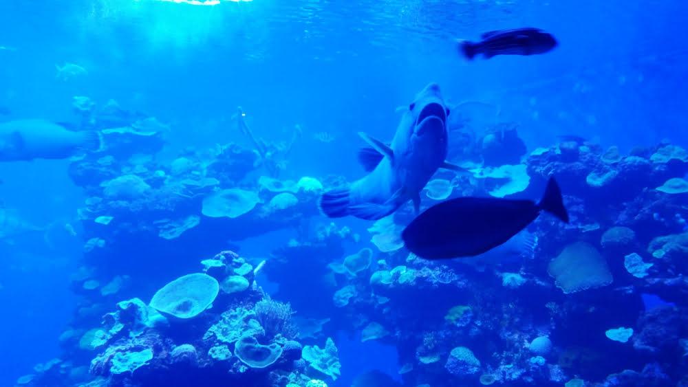 aquarium palma de mallorca vacanta spania