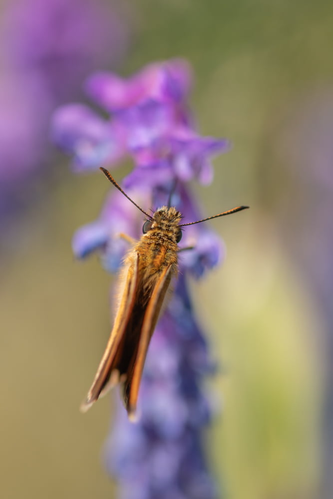 Fluture. close up