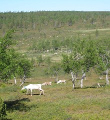 summerphoto2lapland