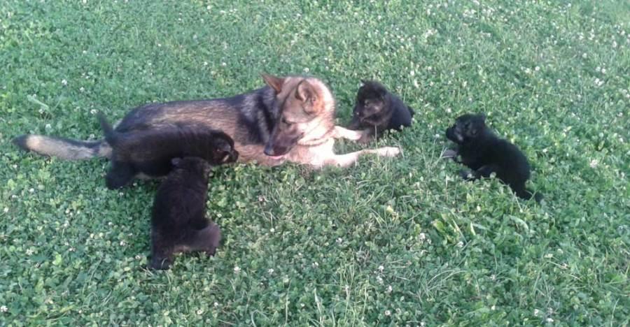 Marjan Mohar, center za šolanje psov