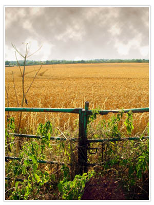 Stormy landscape final